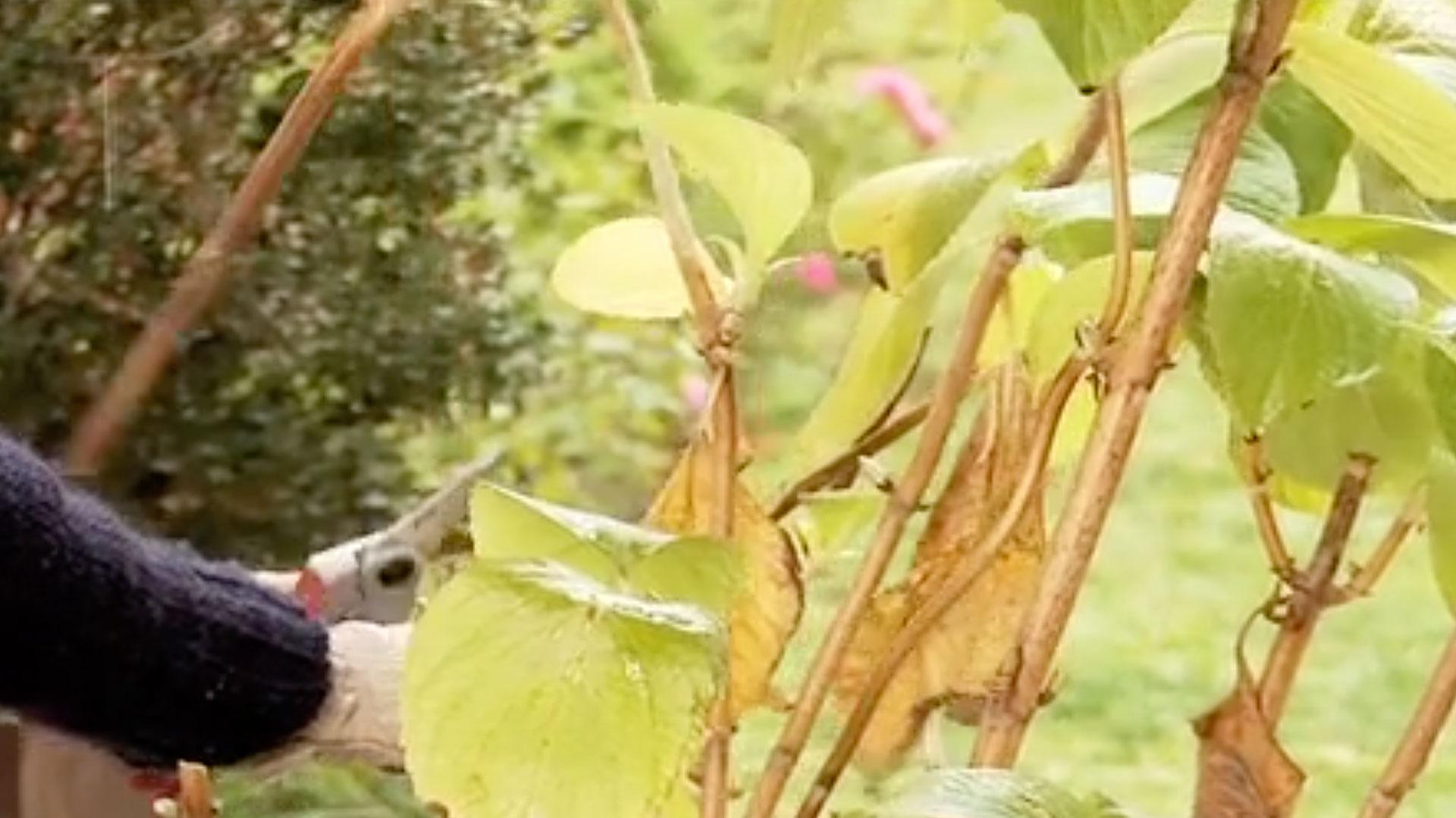 Aunque en la naturaleza las formas de los árboles vienen pre-establecidas, algunos ejemplares se van desordenando a medida que crecen, pero es posible definir o modificar sus formas a través de podas. El caso más exacerbado es el del arte topiario, que busca realizar verdaderas esculturas vegetales. En general, los árboles de crecimiento lento requieren poda mínima, sin embargo, en algunos casos es conveniente definir mejor su estructura a través de una poda de formación.