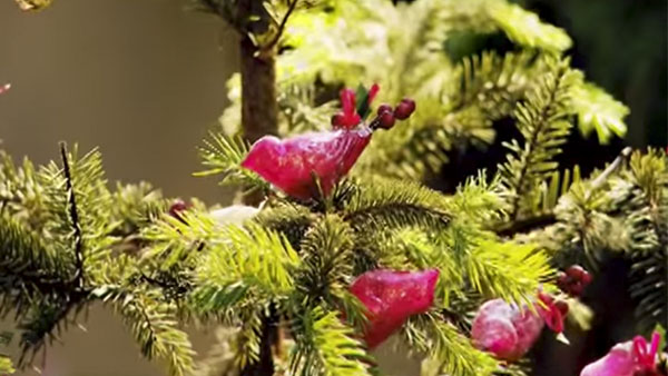 Se cree que la decoración navideña nace en el año 700, cuando San Bonifacio asoció al cristianismo la costumbre nórdica de adornar un abeto con manzanas y velas. De ahí que la decoración clásica sea en base a guirnarlas de luces y esferas rojas. Incluso hoy que las velas se han ido hacia atractivos candelabros, las luces acompañan árboles de fantasía o cuando la tecnología ofrece pinos con luminosas hojas de fibra óptica. Por cierto, también propusimos cómo plantar un pino natural para dejarlo en casa pasadas las fiestas.